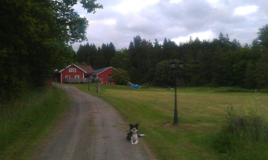 Nipegården